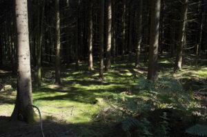 Photographie de paysage de sous-bois