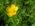 Exclue-2012_05-Goyrans_Balade_Verte_2