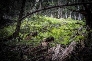 Tirage d'art - photographie de montagne